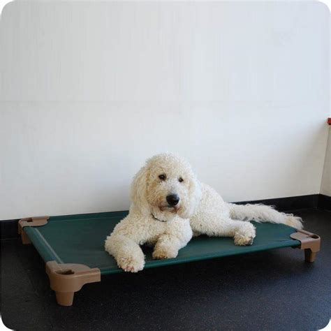 elevated dog beds for large dogs raised dog beds for large dogs uk webnuggetzcom dog beds