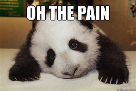 Pain Meme - oh the pain pain panda quickmeme
