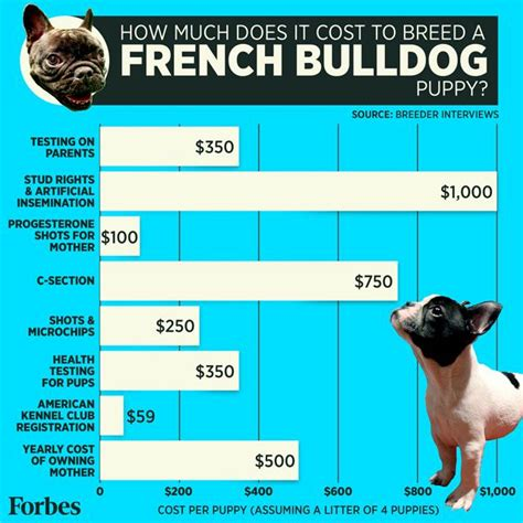 dog c section cost french bulldog puppies inside the business of breeding
