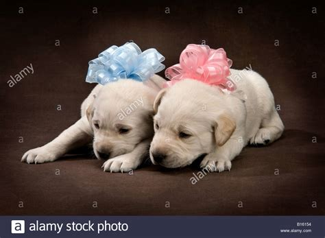 pink puppies alf img showing gt with puppies pink bow