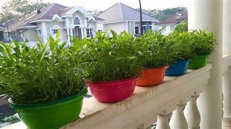 Jual Bibit Kangkung Air cara menanam sayuran organik bibit