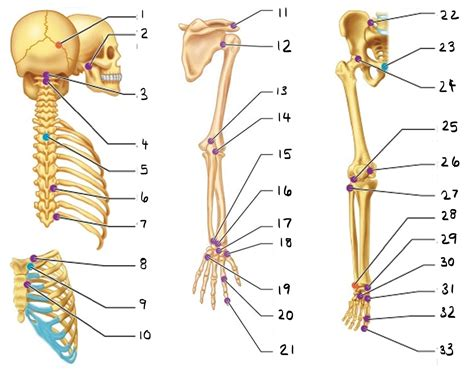 anatomy and physiology diagram quizzes human anatomy and physiology of joints diagram of