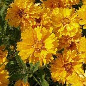 significato dei fiori gialli linguaggio dei fiori di colore giallo il giardino tempo