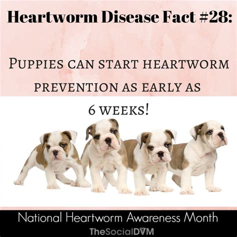 heartworm prevention 11 best heartworm awareness month images on