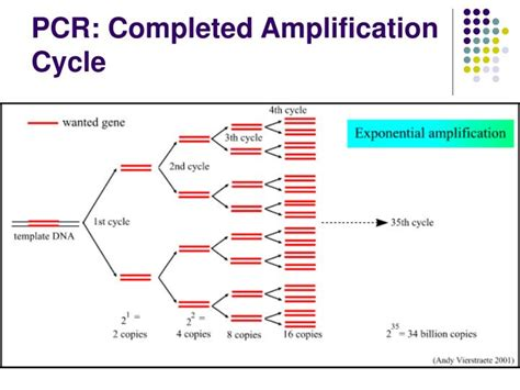 pcr product as template ppt chapter 7 nucleic acid lification techniques