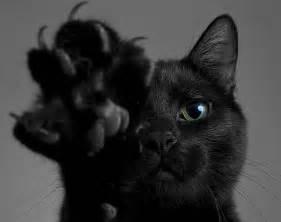 black cat appreciation day a well read woman