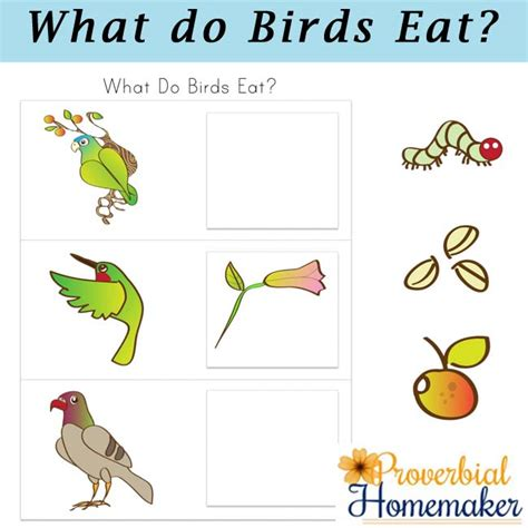 birds and their food printable pack proverbial homemaker