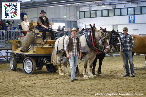 cavalli da carrozza cavalli da tiro pesante vendita cavalli tpr tiro pesante