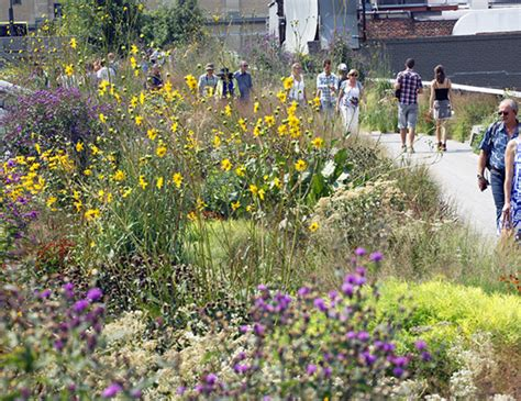 Line Gardens by Garden Tour Grasses Wildflowers Friends Of The