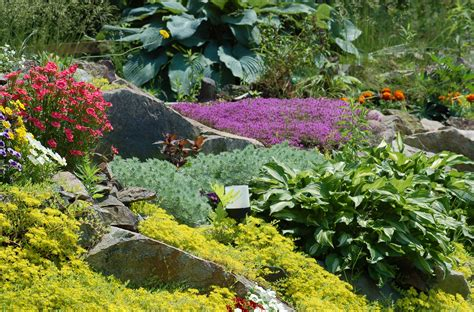 plants for a rock garden how to build rock gardens photo tutorial