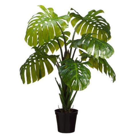 Tanaman Monstera Deliciosa 5 split leaf philodendron monstera silk plant w pot