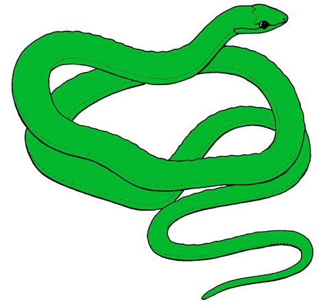 animated clipart animated pictures of snakes clipart best