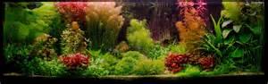 planted tank or nothing by zsolt kucs aquarium