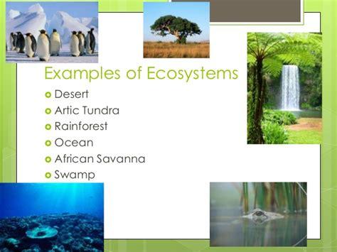 exle of ecosystem ecosystems powerpoint