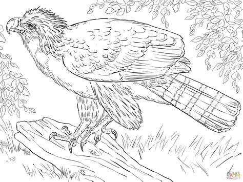 coloring page harpy eagle philippine eagle perched on a branch coloring page