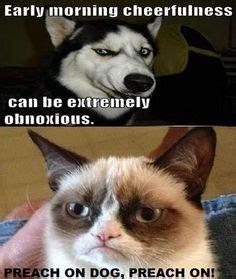 Grumpy Cat Wedding Meme - random likes on pinterest pajama set swedish chef and