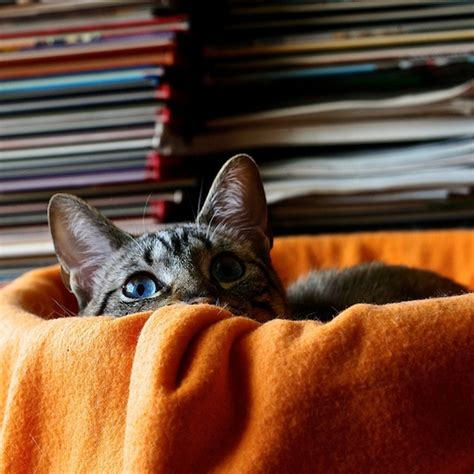 cat haiku sweet verses books poems archives