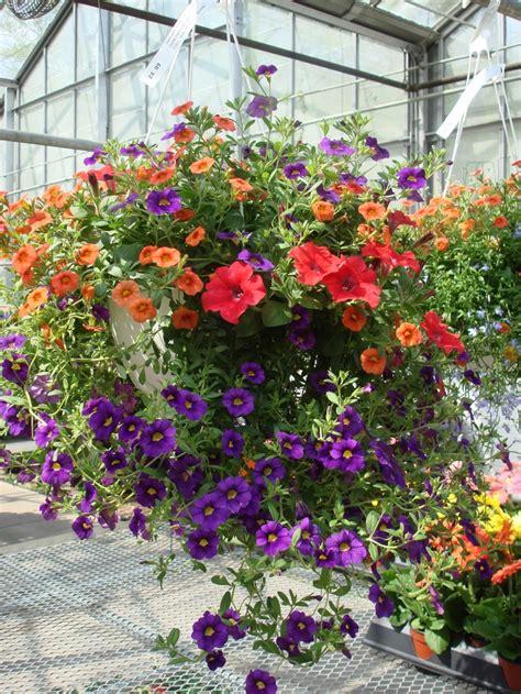 Planters Garden Center by Jackson Florist And Garden Center Mixedhangingbasket