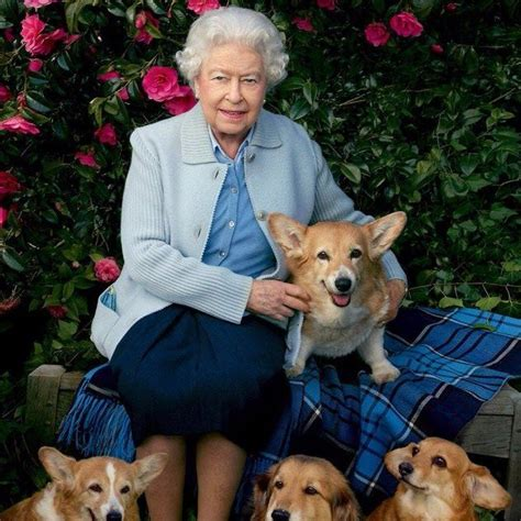 corgis queen elizabeth queen elizabeth corgis www pixshark com images galleries with a bite