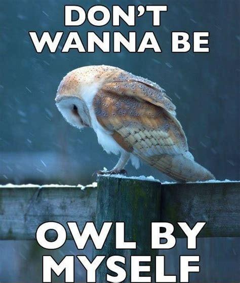 Sad No Meme - hilariously adorable owl memes 14