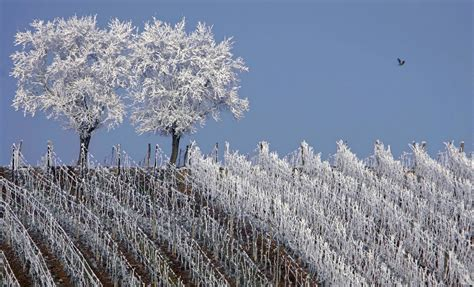 10 awe inspiring photos of vineyards in the winter lastella