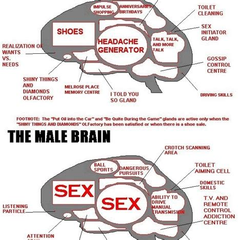 ode to the brain positiveneuro sheppy s vs brain