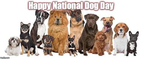 national puppy day meme national day imgflip