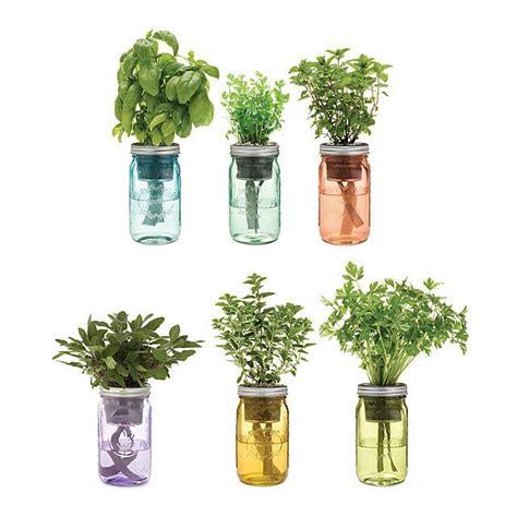 mason jar indoor herb garden grow   herbs