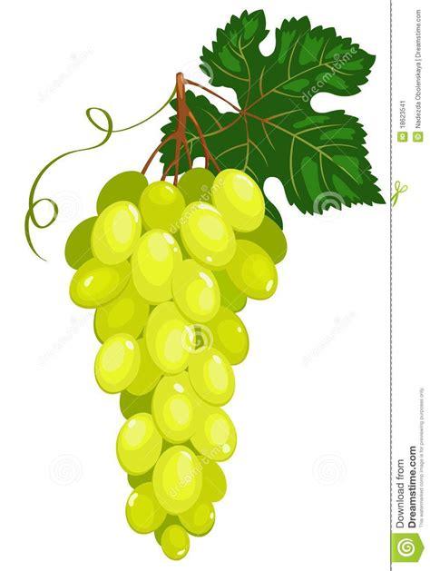 imagenes de uvas vector racimo de uvas verde oscuro ilustraci 243 n del vector