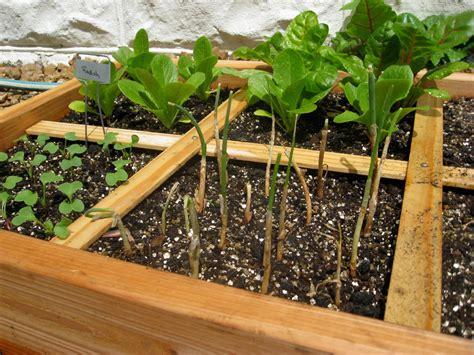 coltivare il proprio giardino come creare un orto nel proprio giardino