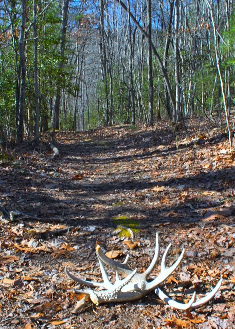 how to a to find deer sheds whitetail deer sheds book covers