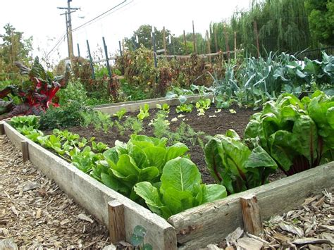Picture Of Vegetable Garden 38 Homes That Turned Their Front Lawns Into Beautiful