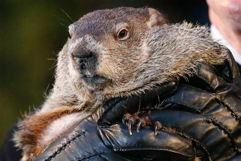 groundhog day jpg groundhog day