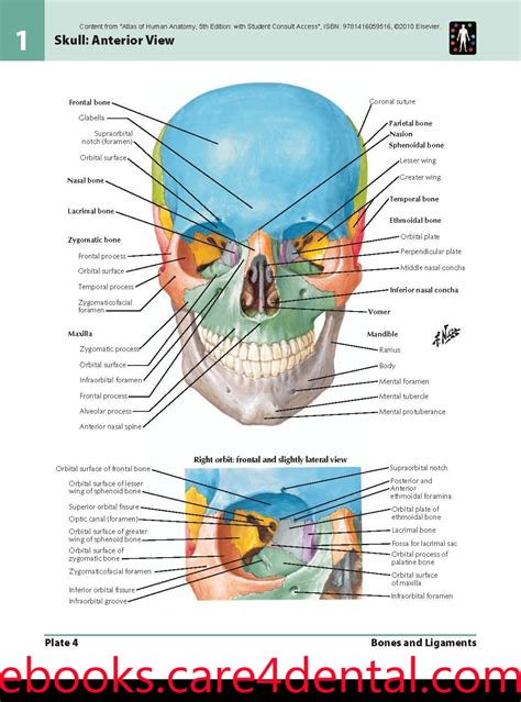 anatomy coloring book pdf netter netter atlas of human anatomy pdf