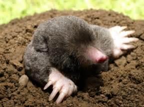 managing moles product range ripley nurseries garden