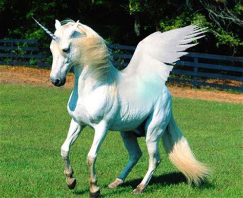 gambar kuda 100 kumpulan gambar kuda bahasa pendidikan bahasa pendidikan