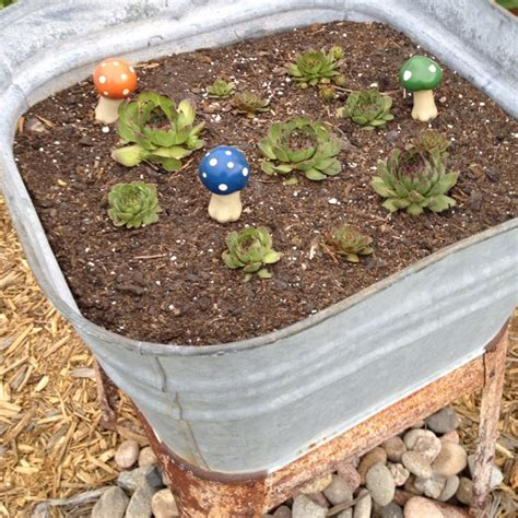 Hens And Planter Ideas by 1000 Images About Hen And On Gardens