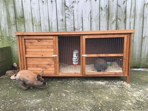 Rabbits Hutch For Sale 2 boy rabbits for sale with large hutch sunderland tyne