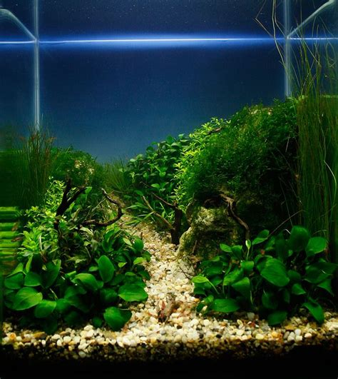 cube aquarium aquascape 111 best images about cube aquascape ideas on pinterest