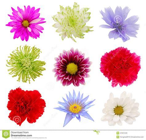 imagenes de rosas varias vari fiori variopinti immagine stock immagine di garofani