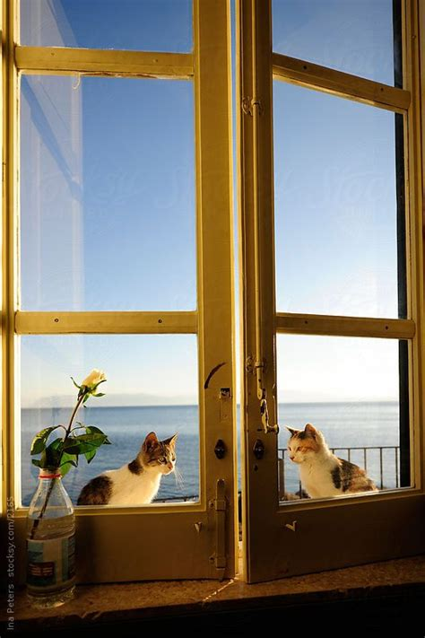 sitting window 17 best images about hollingsworth on window image search and cat sitting