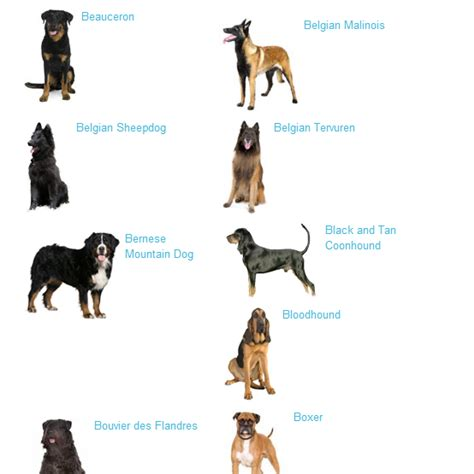 types of large dogs large breeds general information