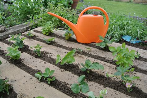 build your own veggie garden using recycled pallets