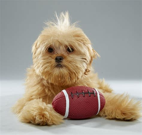 puppy bowl mvp puppy bowl xiii mvp puppy bowl animal planet