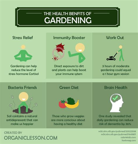 gardening  comprehensive guide  planning  harvesting