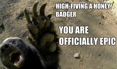 Honeybadger Meme - honey badger high five honey badger know your meme