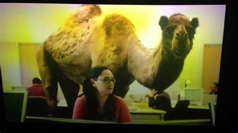 geico hump day camel commercial happier than a youtube geico hump day camel commercial happier than a youtube