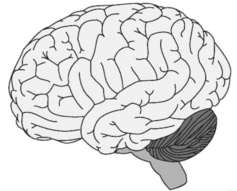 brain coloring page neuroscience resources for coloring book