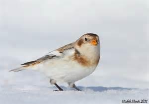 birds pictures winter birds galleries bird pictures