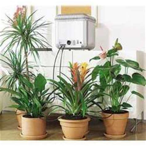 top indoor plants  air filters  homeplant